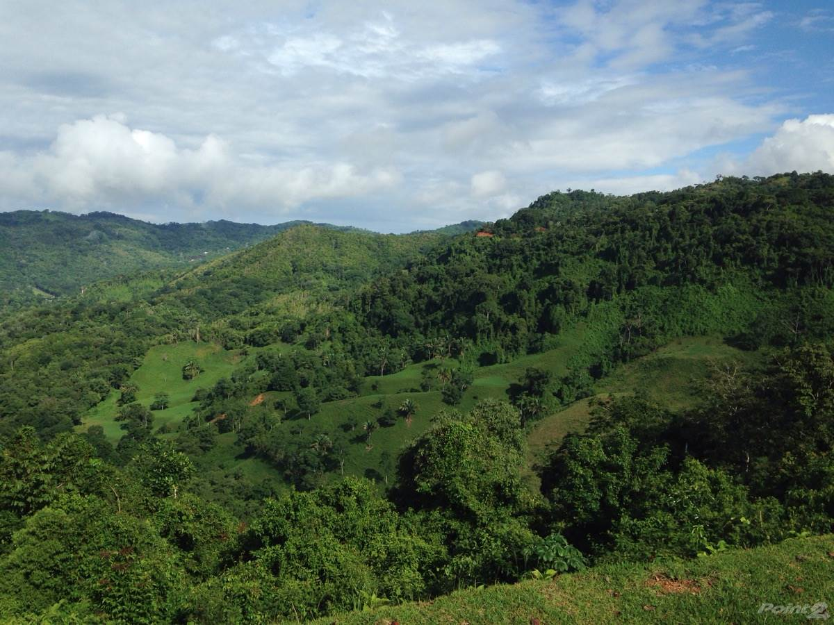 deforestation in costa rica essay Costa rica is one of the world's largest pineapple producers, with fruit from this country ending up on supermarket shelves across the united states and europe.